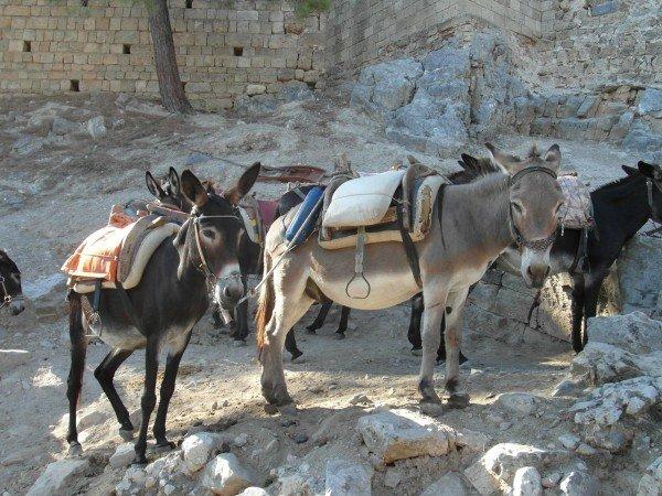 Oslí taxi - stanoviště u akropole Lindos